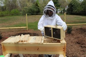 150419 S Dumping Bees