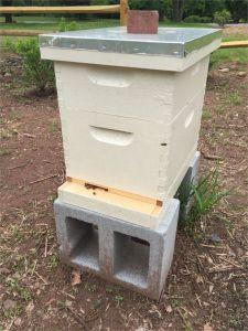 150517 R2 Hive