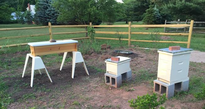 May 23 Hives