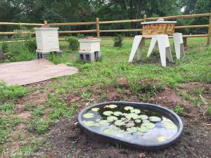 Bee Pond and Hives