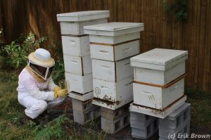 150712 Kirstin Hive 6