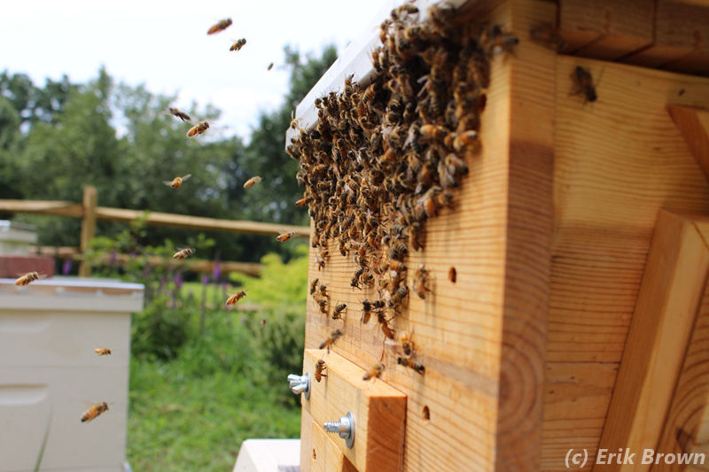 Top Bar Hive Forages