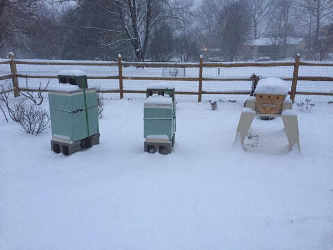 160122c Snow Hives