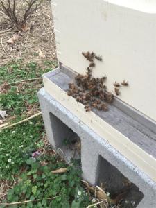 160312 Mars Bees