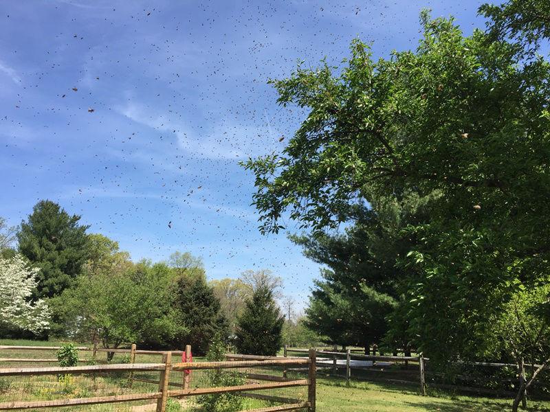 160425 Starting Swarm