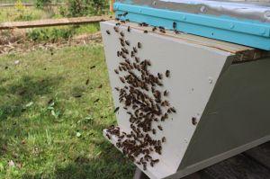 160425 Swarm Box6