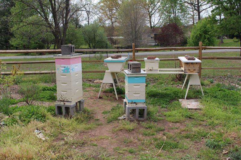 160425 Swarm Yard1