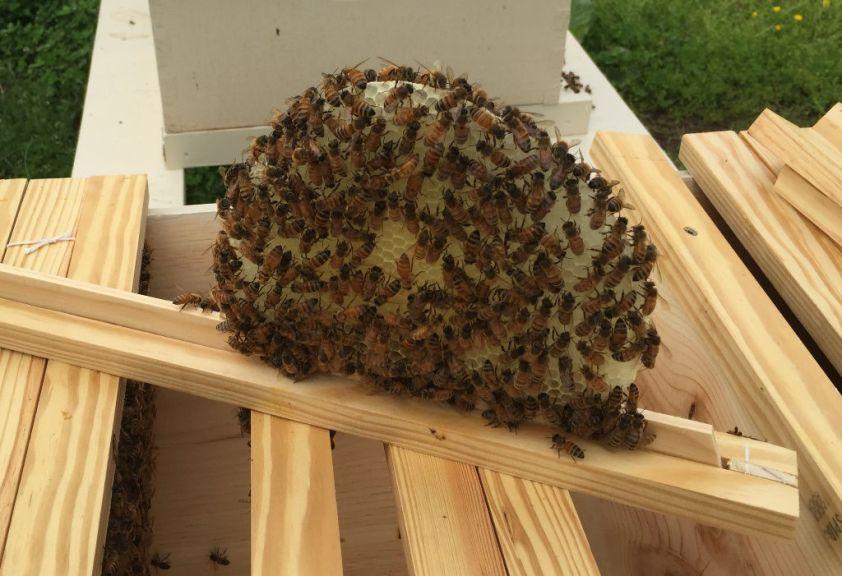 160508 Hive Comb