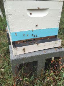 161001b-jupiter-bees