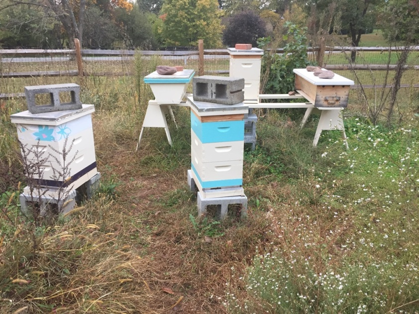 The apiary on Friday after feeding the bees. You can see the top feeders on Jupiter and Ganymede (the unpainted wood). © Erik Brown