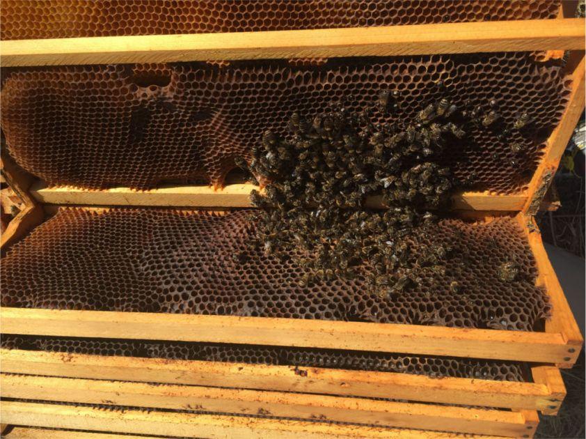 180131a Mars Bees