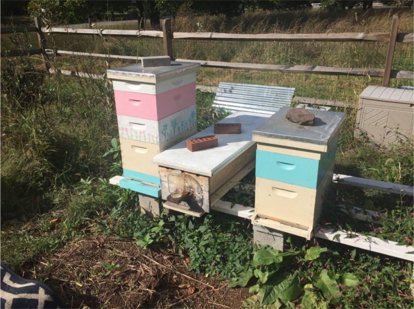 181013d Hives