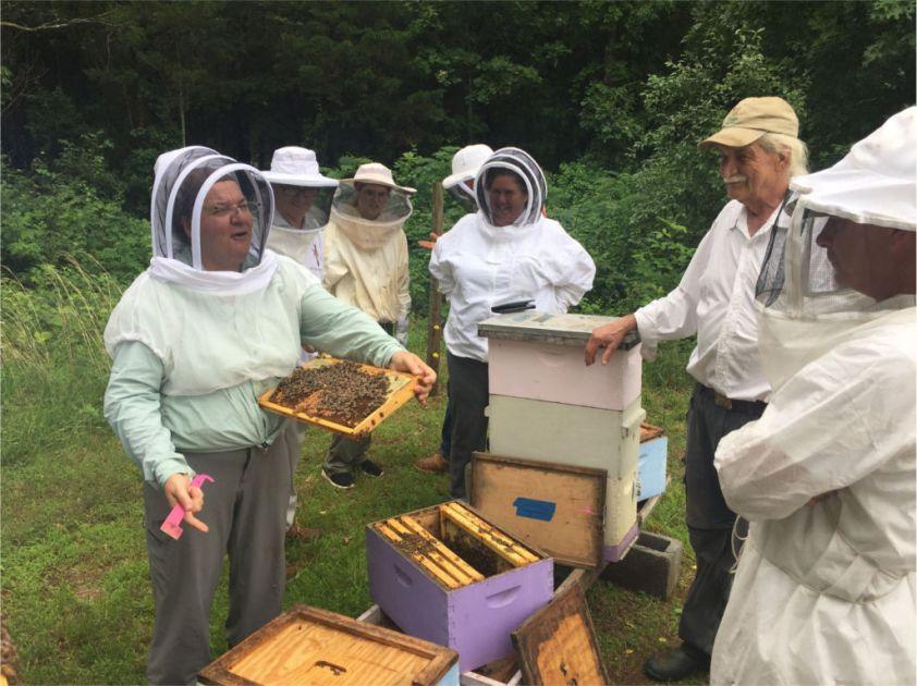 180610 karla apiary