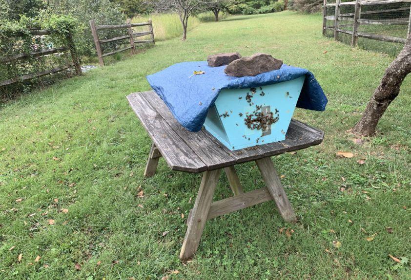 Swarm Hive