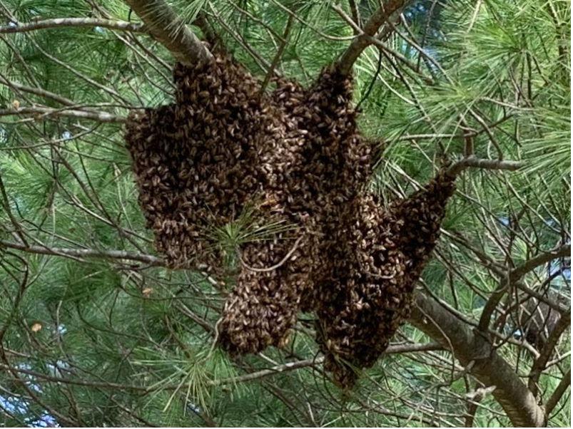 200317a Nuc Swarm