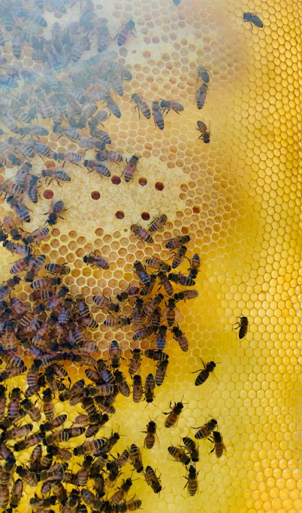 200329a Swarm Frame